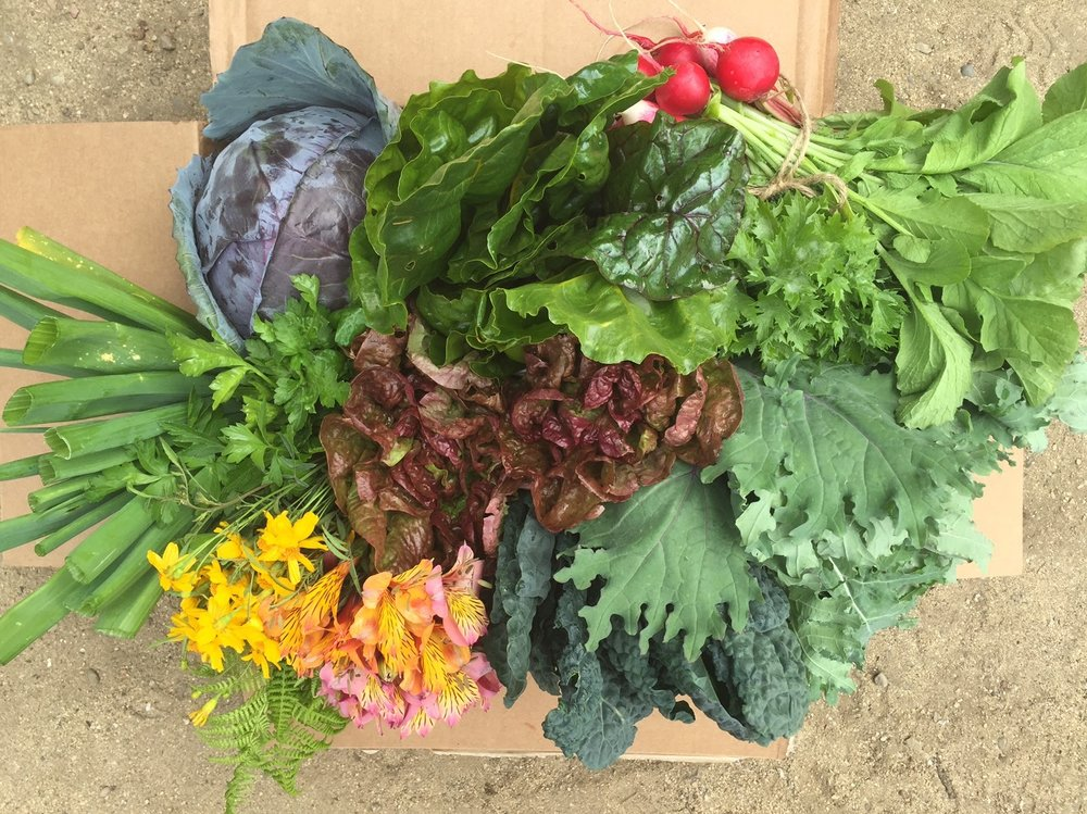 Harvest box is ready to go.