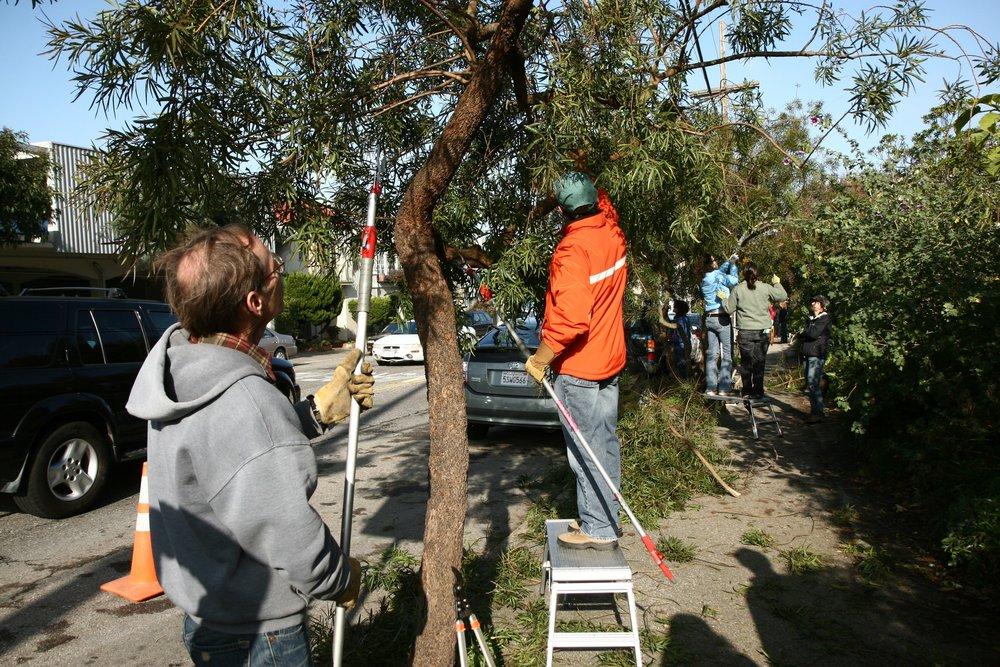 Pruning back the sidewalk trees.