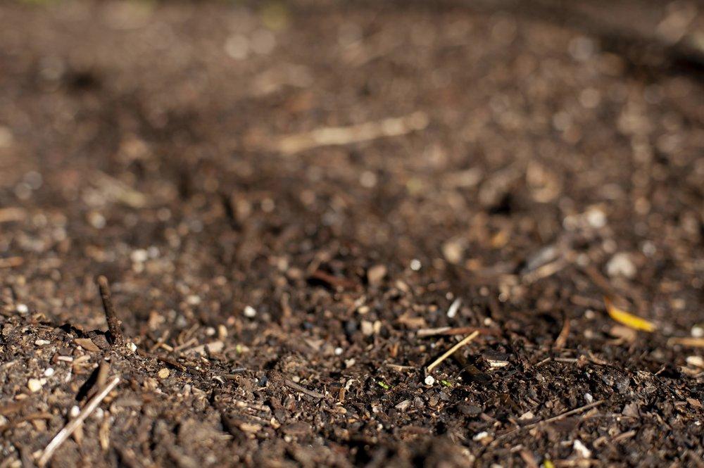 Soil rich in humus and organic matter.