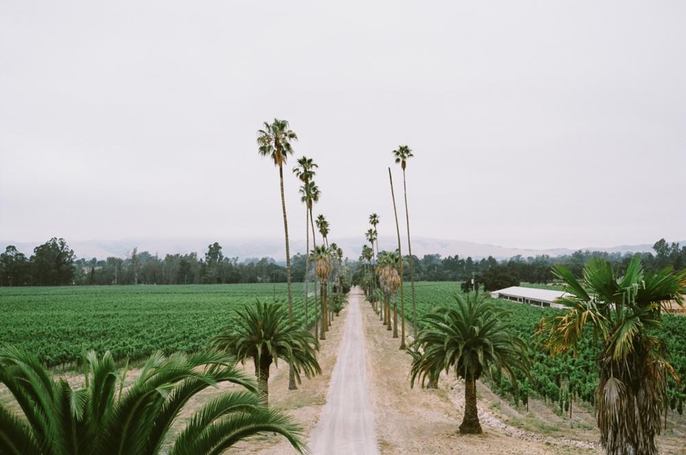 Scribe Winery, California, USA