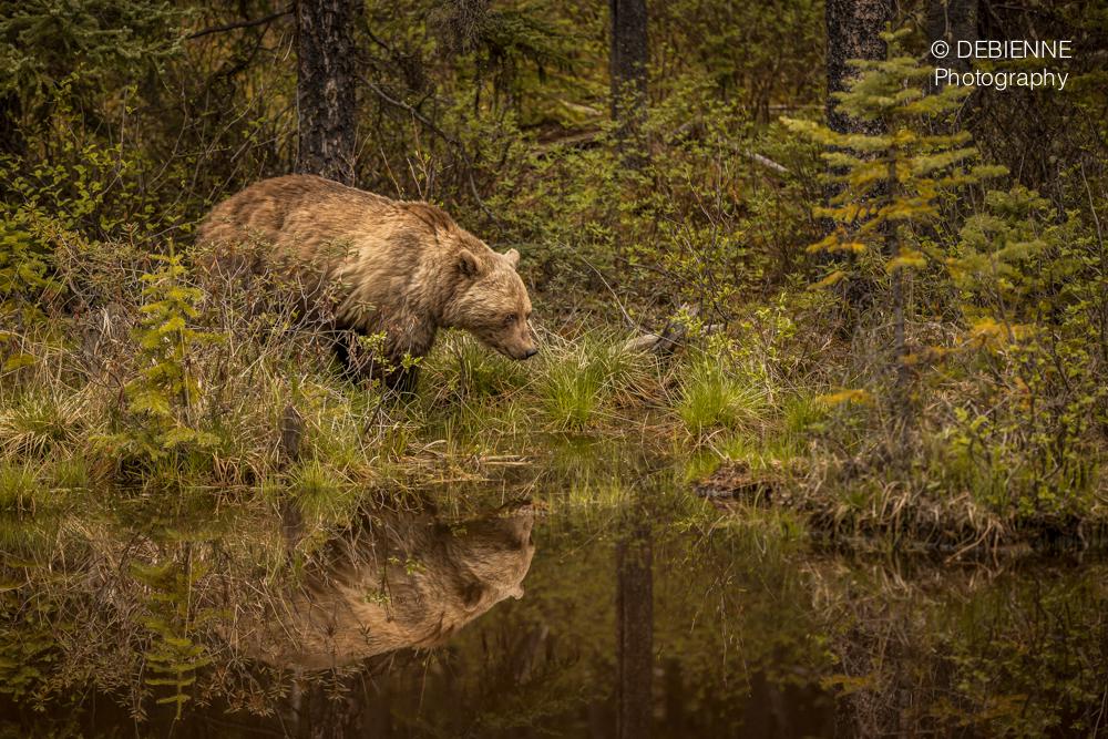'Bear Painting'