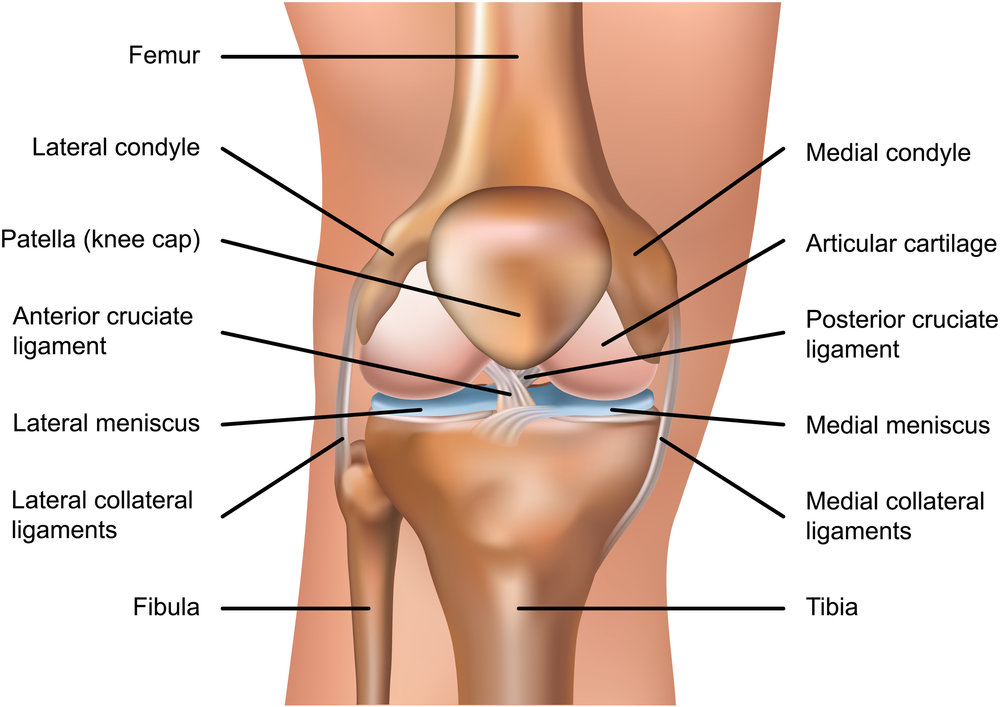 Matthew Boyle Orthopaedic Surgeon Knee Anatomy Knee Ligaments