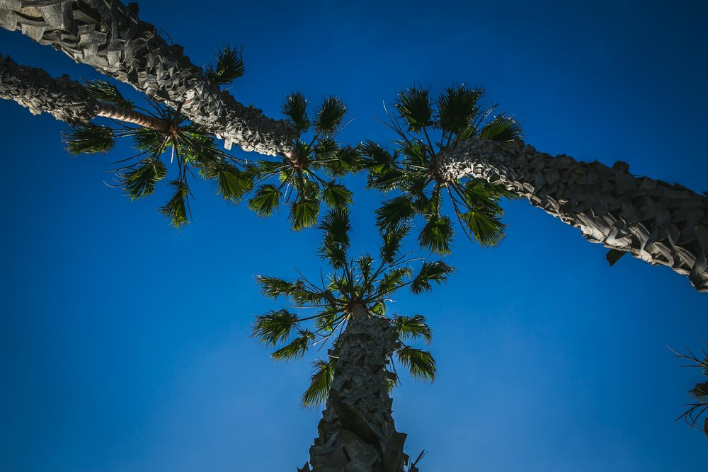 ALEX TAFRESHI - Los Angeles, CA+1 714.356.2846theglobehop@gmail.com@theglobehop