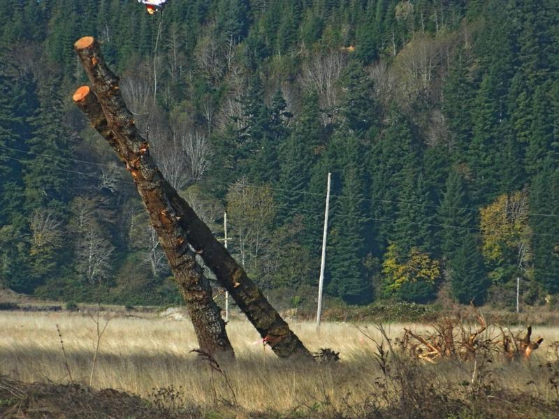marsh restore trees slant 14 oct 16.JPG