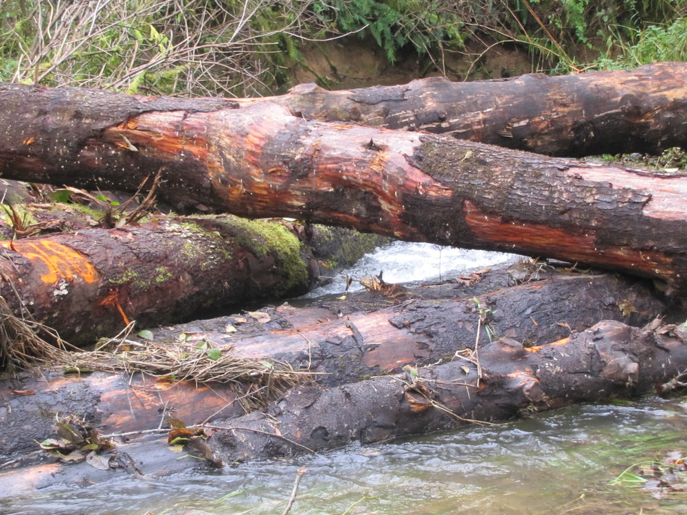 Large Woody Debris (LWD) placed in Mill Creek as a part of the restoration project and the effects on stream habitat and salmon populations will be monitored for years to come.