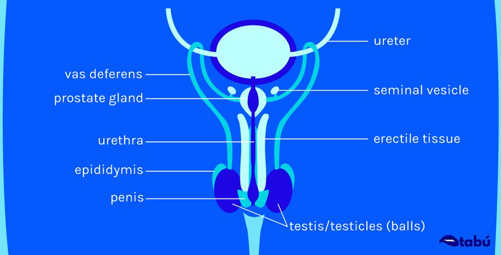 male-bluebg.png