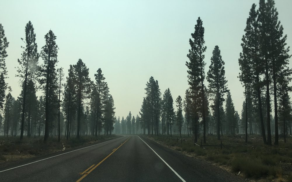 Smoke in the Trees at Newberry Caldera