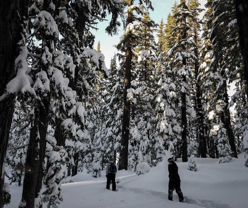 Want to explore the old growth Hemlock forest surrounding Mount Bachelor? We got you.