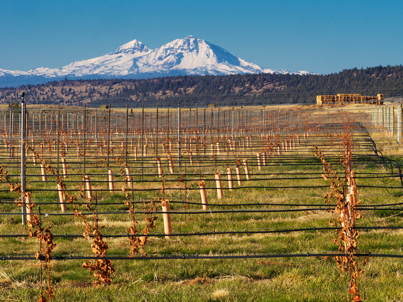 Bend-Wine-Tours-Oregon-Wanderlust
