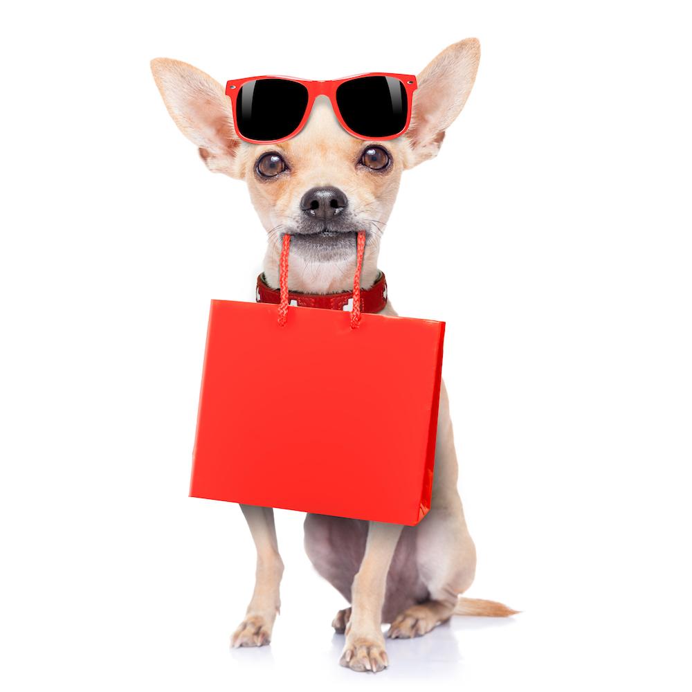 shopping-chihuahua