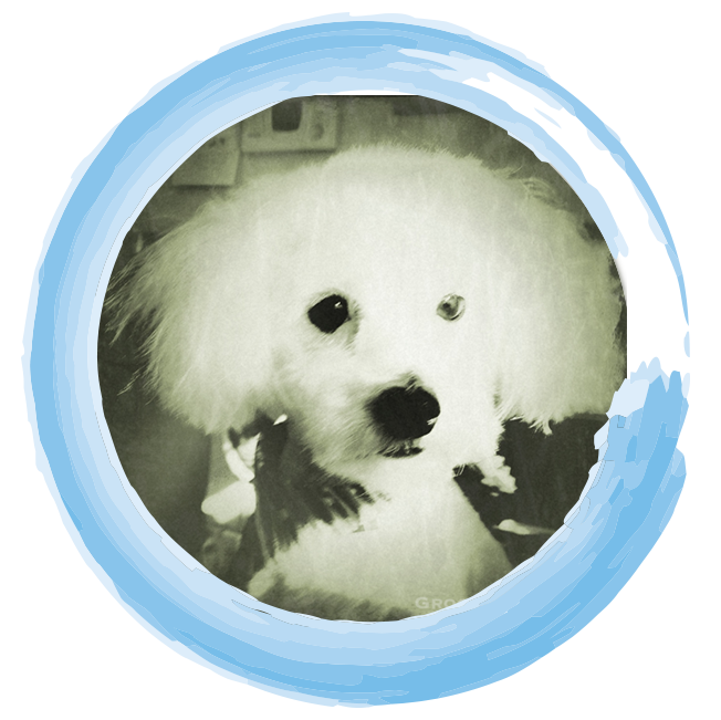 TinyEinstein-Circled.png