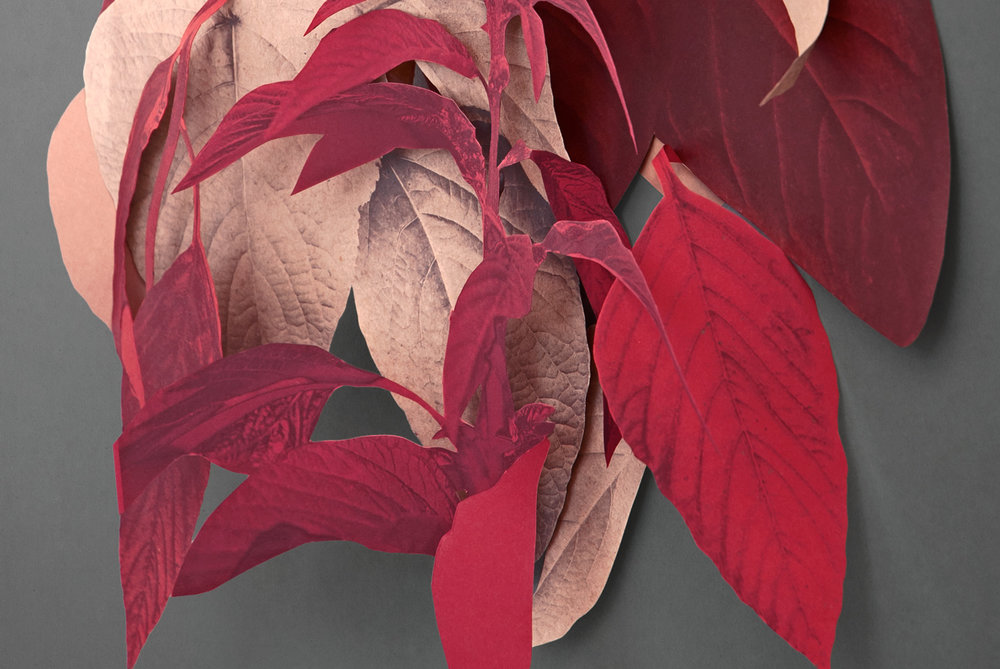 AMARANTH_detail.jpg