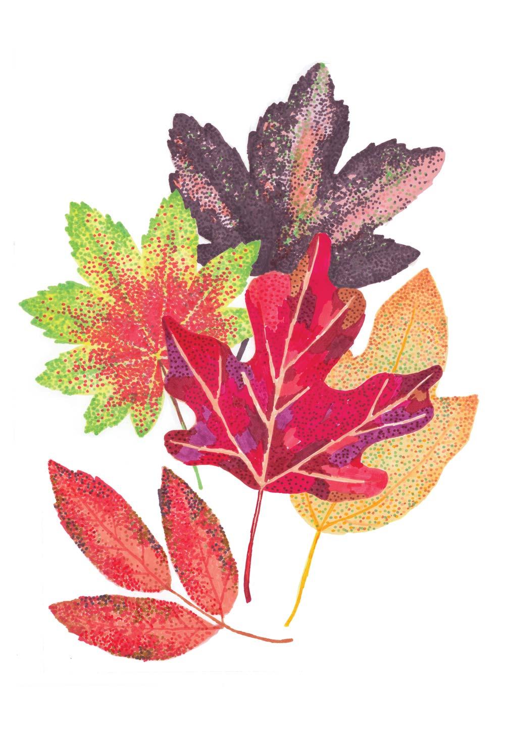 T11_foglie_colore.jpg