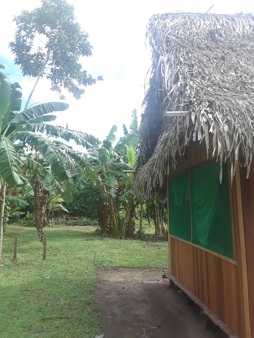 My Bungalow in the Amazon Jungle