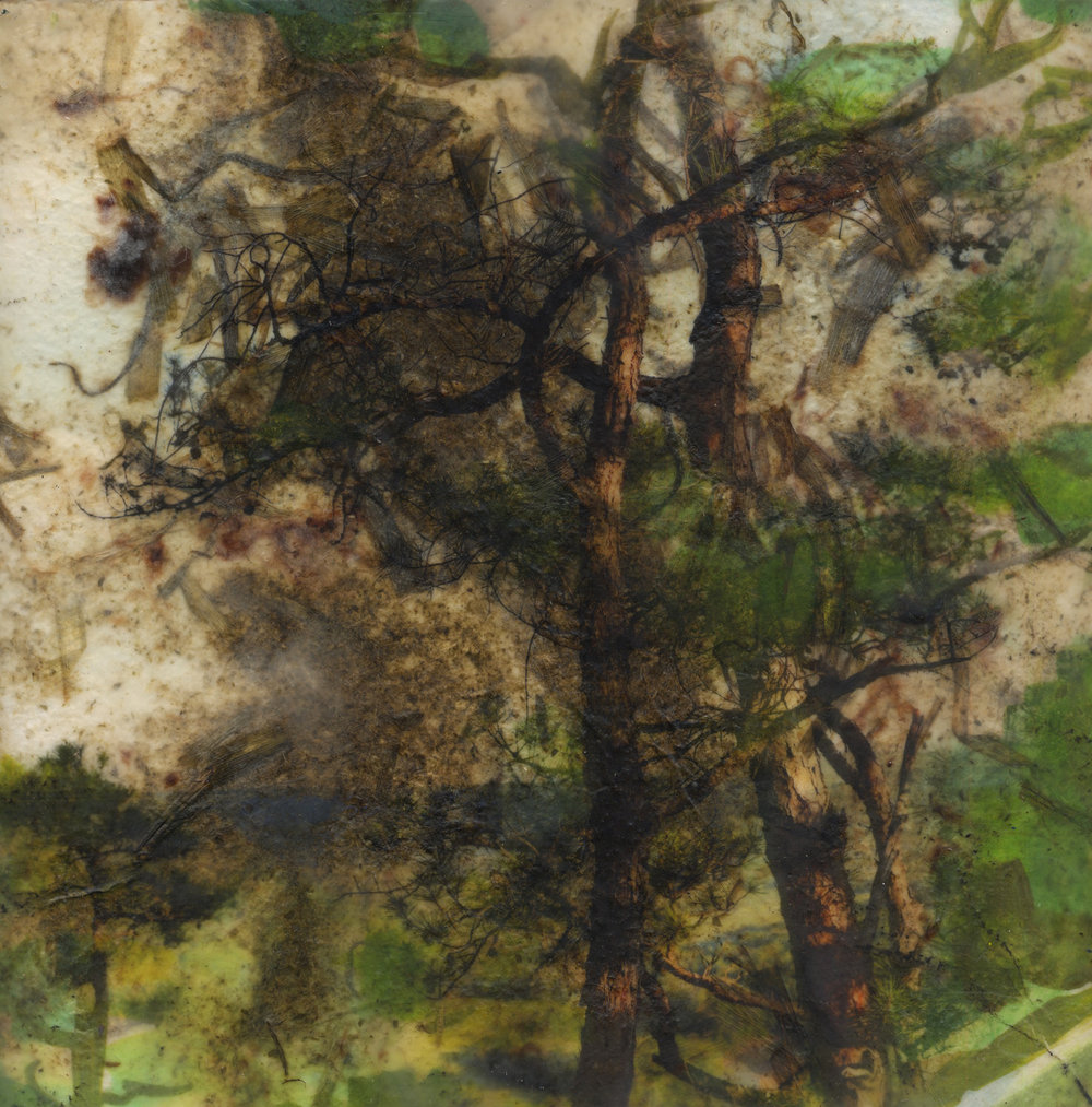 Lobelia (pines), 2019, Pigment print on handmade paper, oil paint, and encaustic on board, 12 x 12 inches