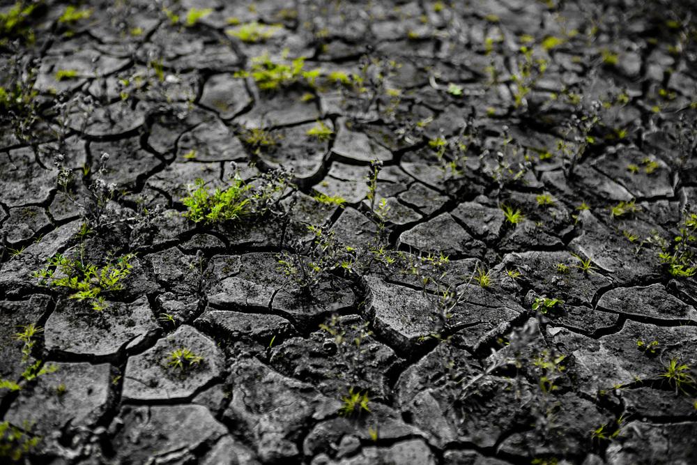 FORO INTERNACIONAL DE LOS PUEBLOS INDÍGENAS SOBRE CAMBIO CLIMÁTICO