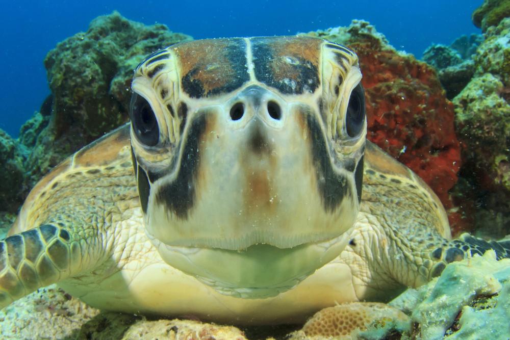 MV Monsoon turtle.jpg