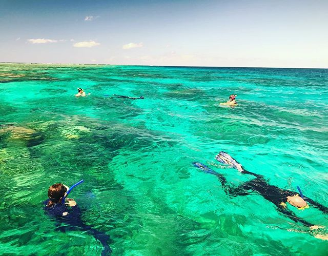 Just another day on the #reef ! 🐠💙🐟💙🐬#mvmonsoon #mvmonsoonportdouglas #gbr #seeaustralia #seeaustralia_qld #thisisqueensland #snorkelling #portdouglas #portdouglasdaintree #portdouglaslife #privatecharter #boating #yacht #fishing #diving #dive #greatbarrierreef