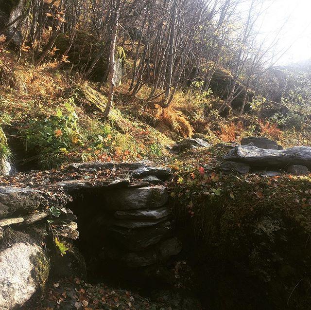Haust i #aurlandsdalen, nydeleg i mellom regnbya, rett før sesongen er over! Legg merke til farger, handverk og lukt... #vandringogverdiskaping #venneravaurlandsdalen #skjerdallandskapspleie #hikinginnorway