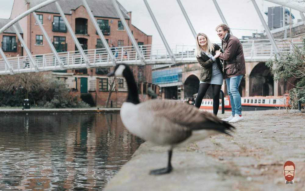 goose photobombs couple by canal.jpg