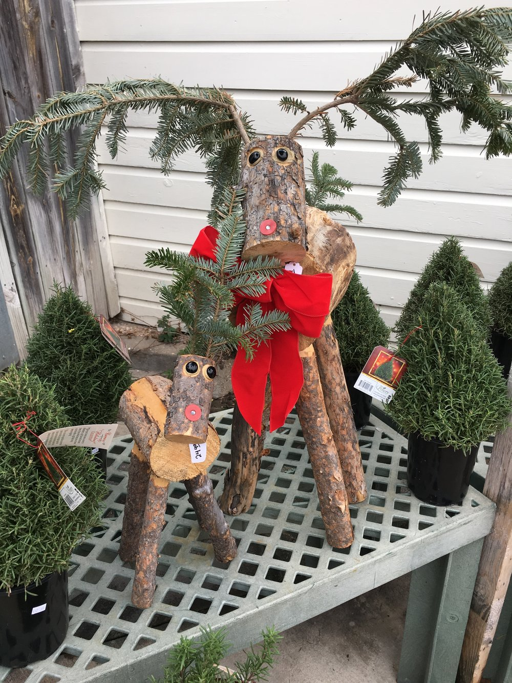 Buy these cuties and come to get fresh greenery from us each year! Rosemary trees make amazing gifts and fill the home with a scent everyone will love.