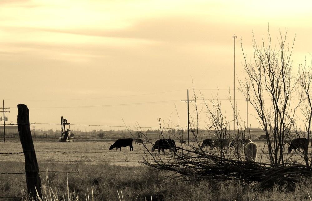 Texas-life.jpg