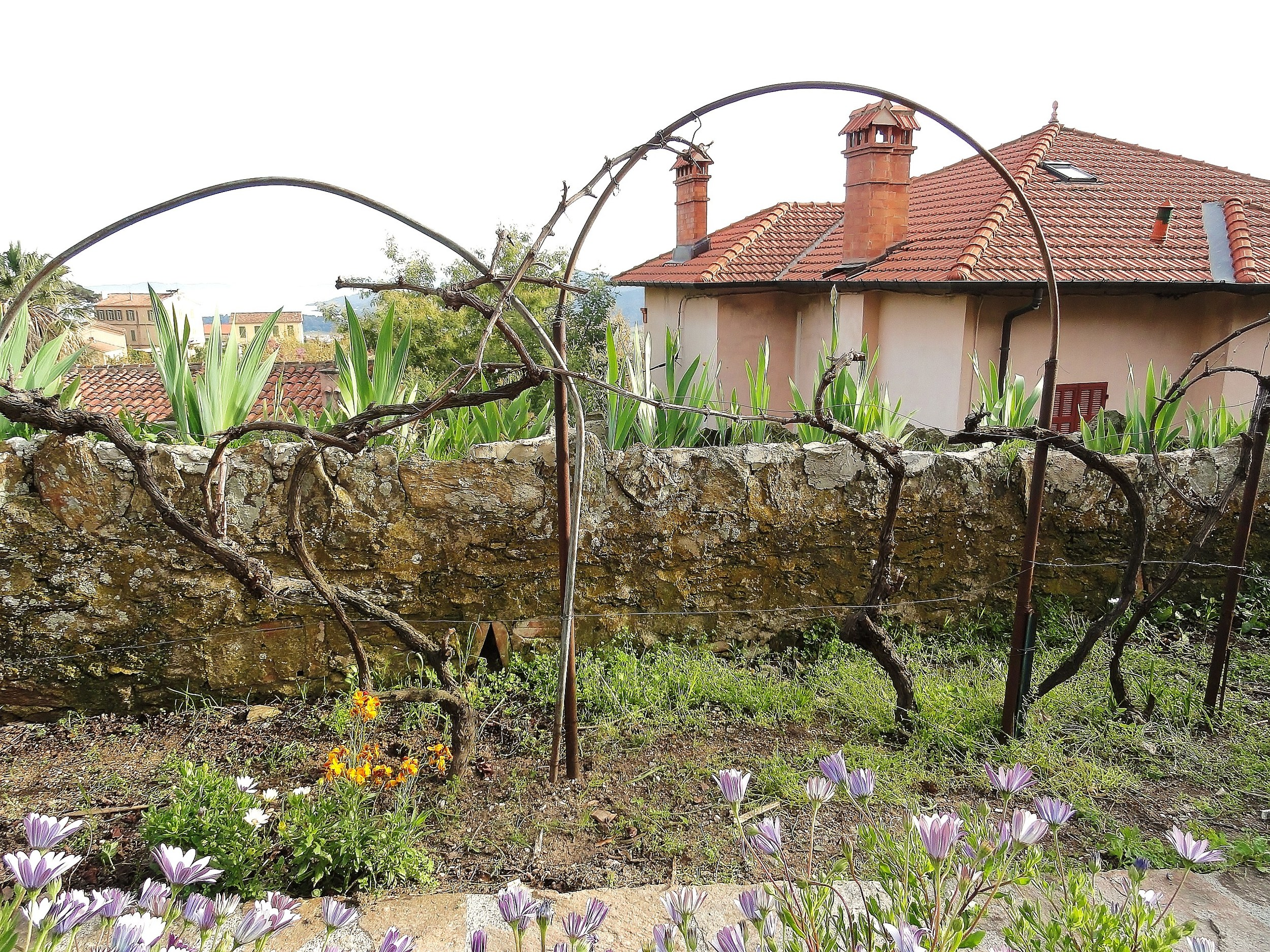 Our Vines Prior to 'Bud-break'