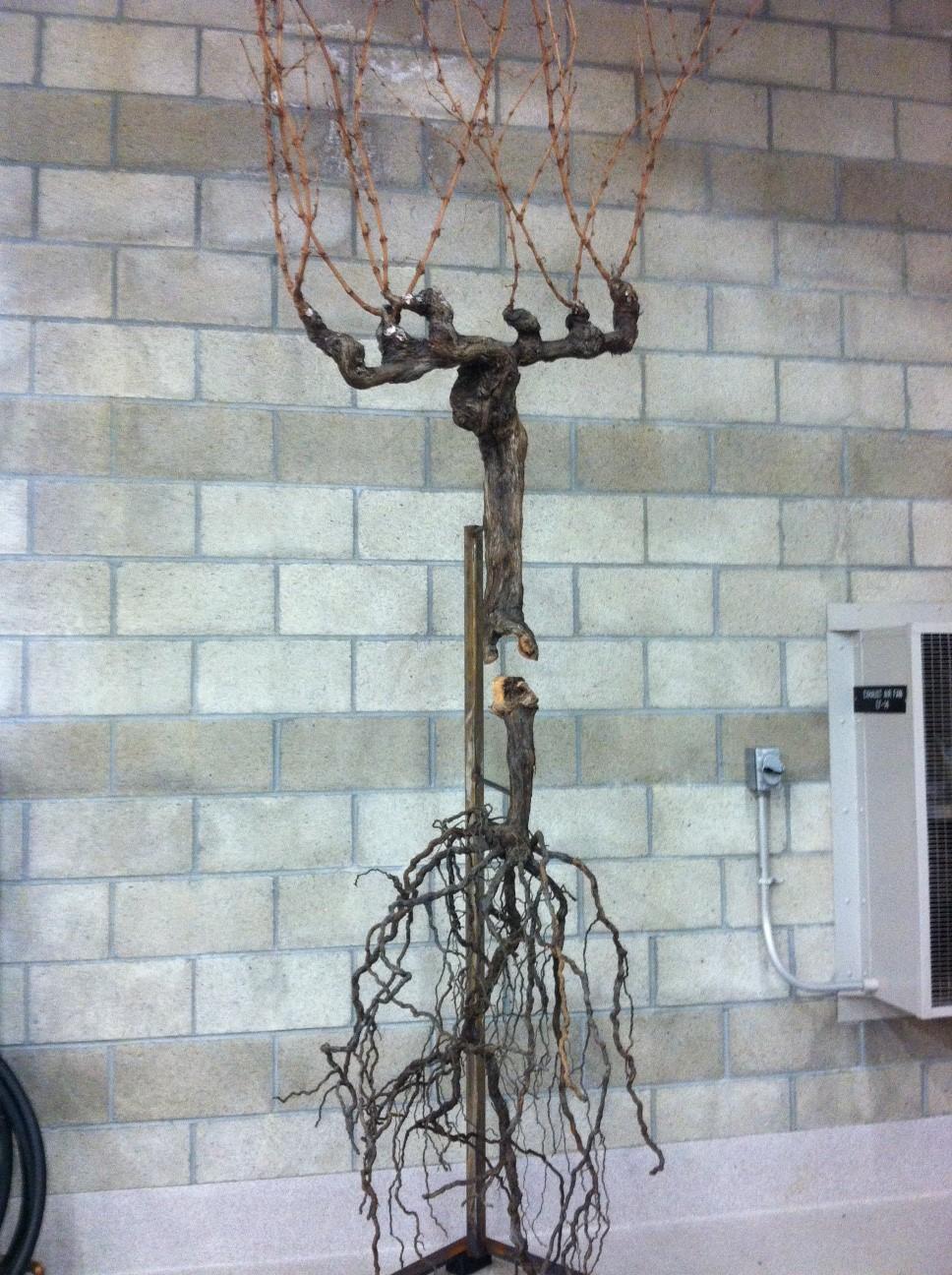Anatomy of a vine