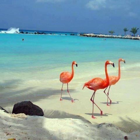 Future travel buddies on Flamingo Island in Isla Holbox