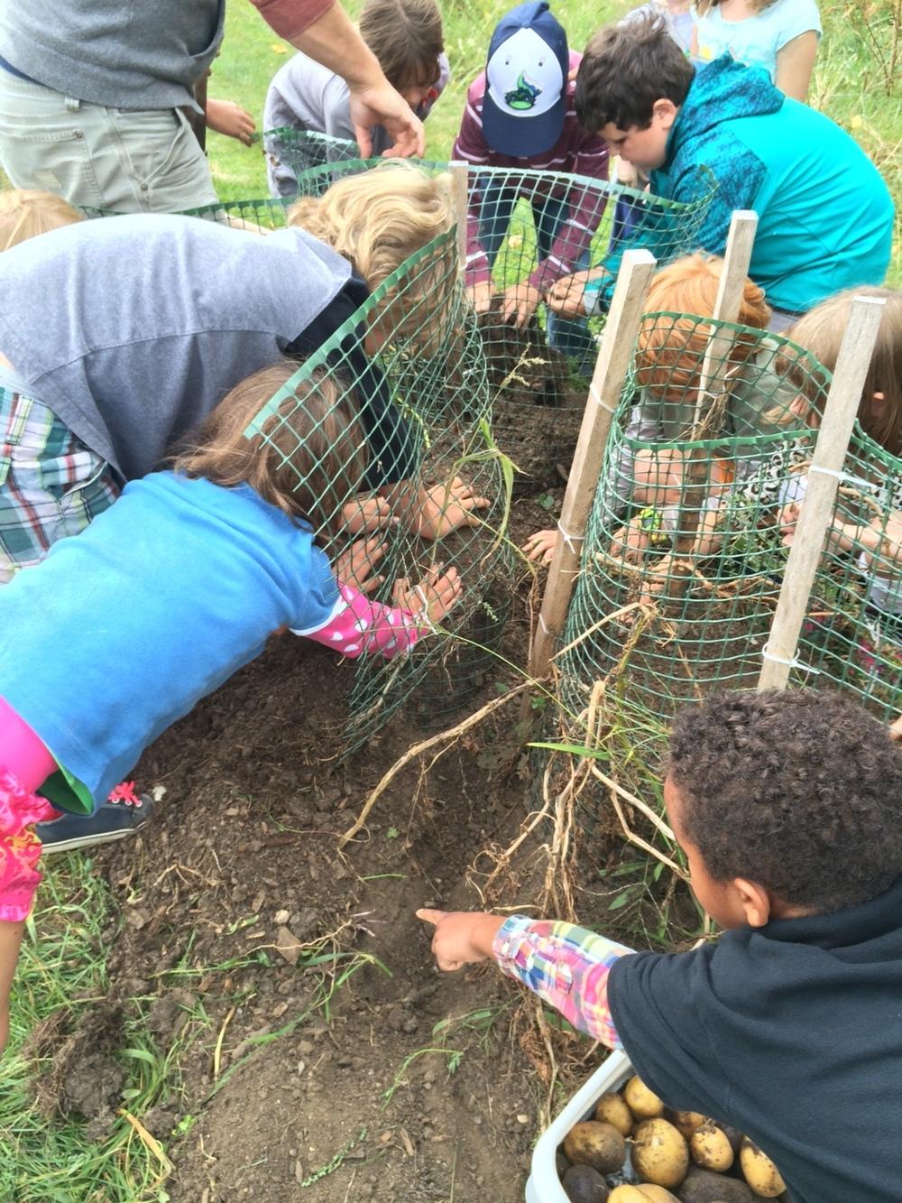 kids harvesting.jpeg