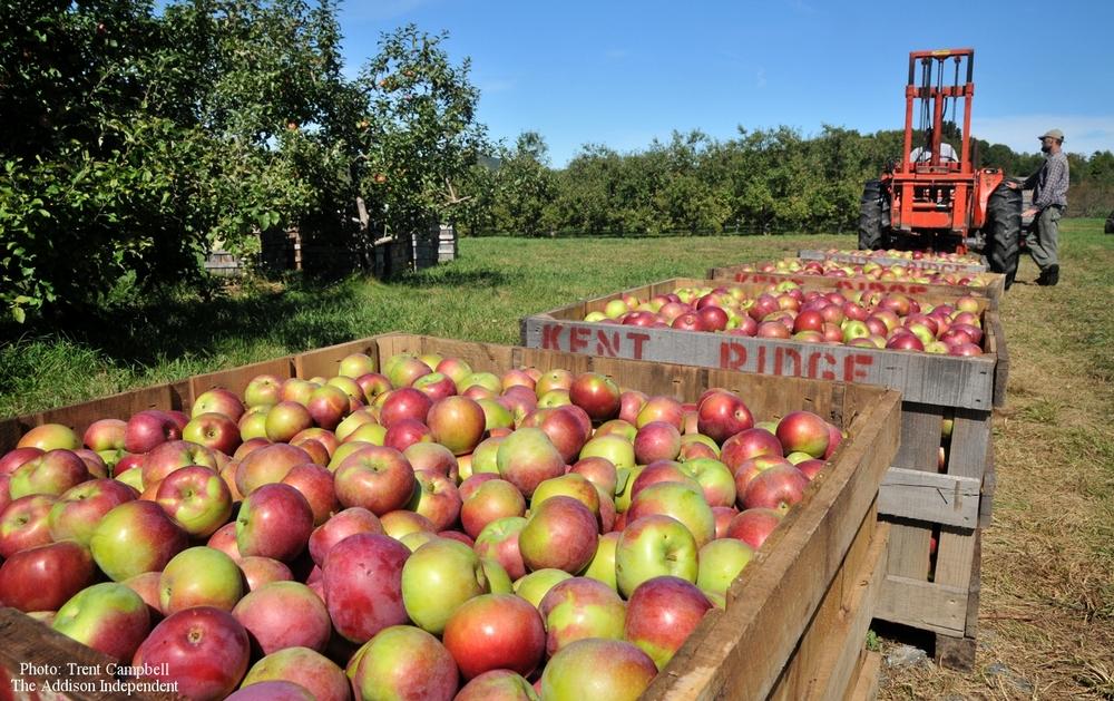 apples2752.jpg