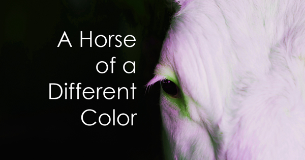 A Horse of a Different Color2.jpg