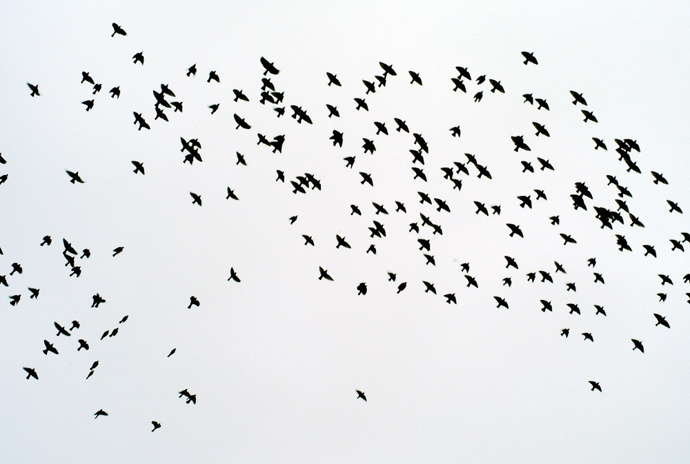 birds crop for web-X3.jpg