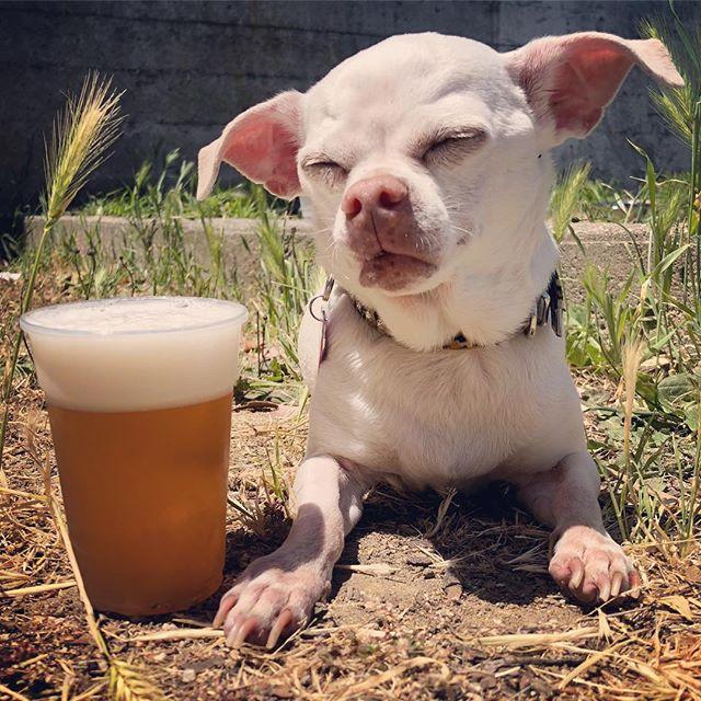 Beer makes Brain super sleepy. #coalitiononhomelessness @quivers_the_batpig