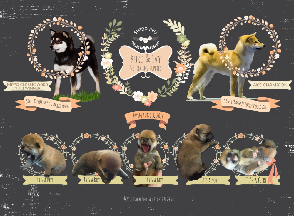 Marketing Poster for Breeding Kennel