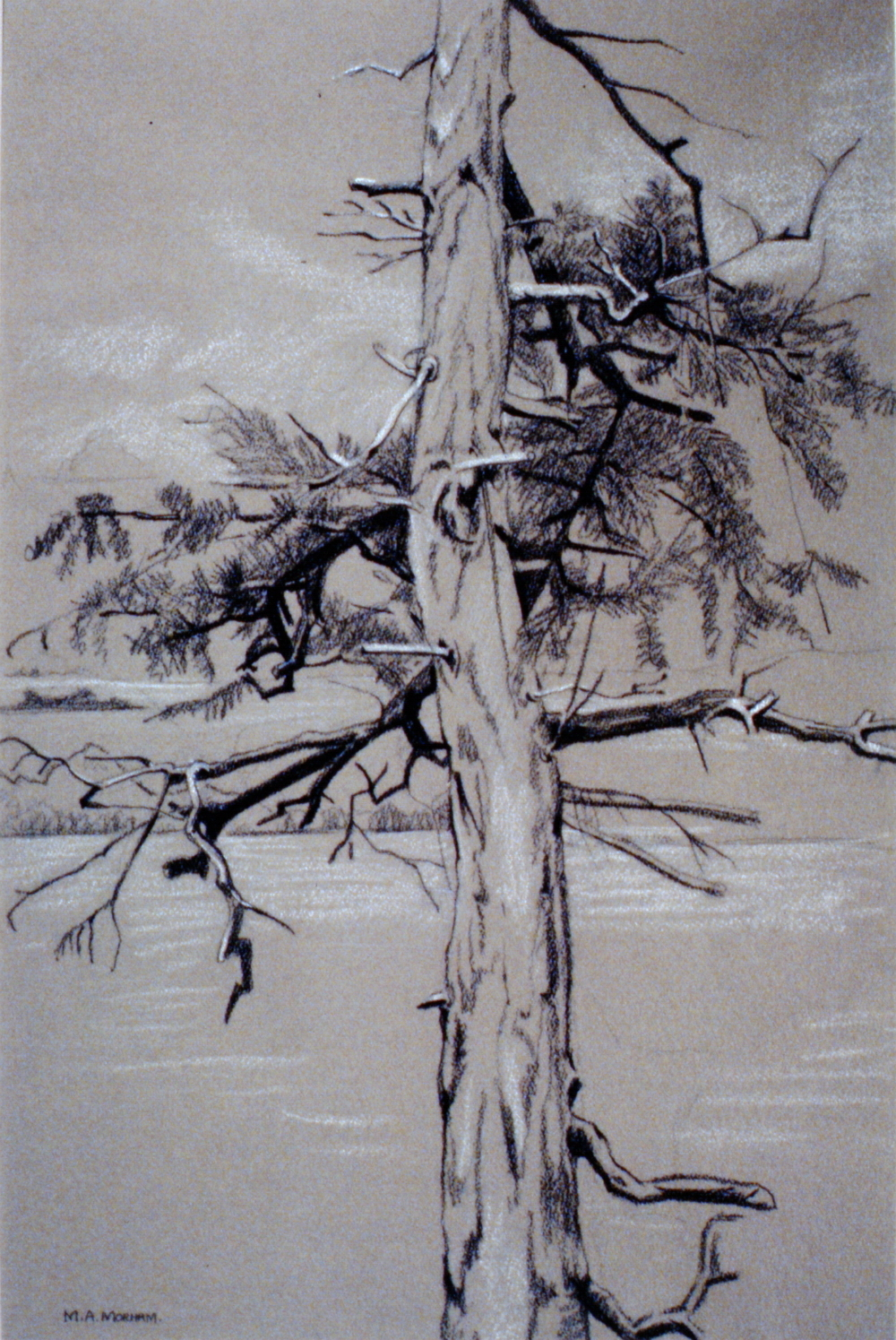 "Tree #6 , n.d., Marion Morham Grigsby, charcoal on paper, 19"" x 12.5"", 1980.04.04. Anonymous gift."