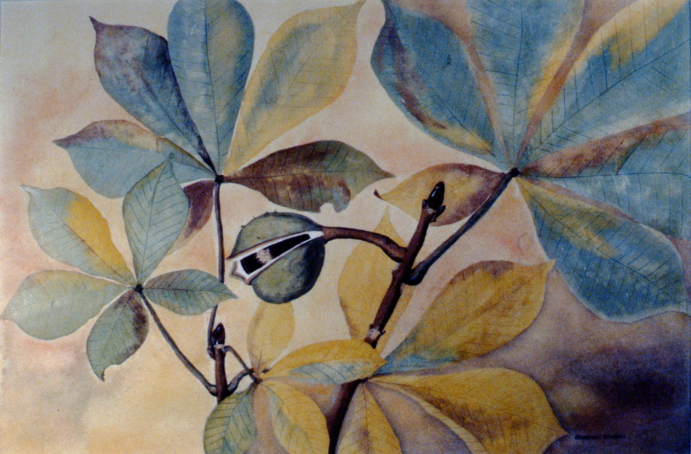 "Horse Chestnuts (Chestnut Leaves),  Marjorie Stedman, watercolour, 13 7/8"" x 21"", 1987.02.01"