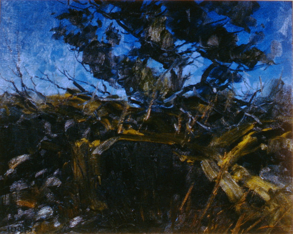 Coastal Pine , Daniel Izzard, acrylic on canvas, 1994.11.01, gift of Elizabeth Whittaker in memory of Dr. Tom Whittaker