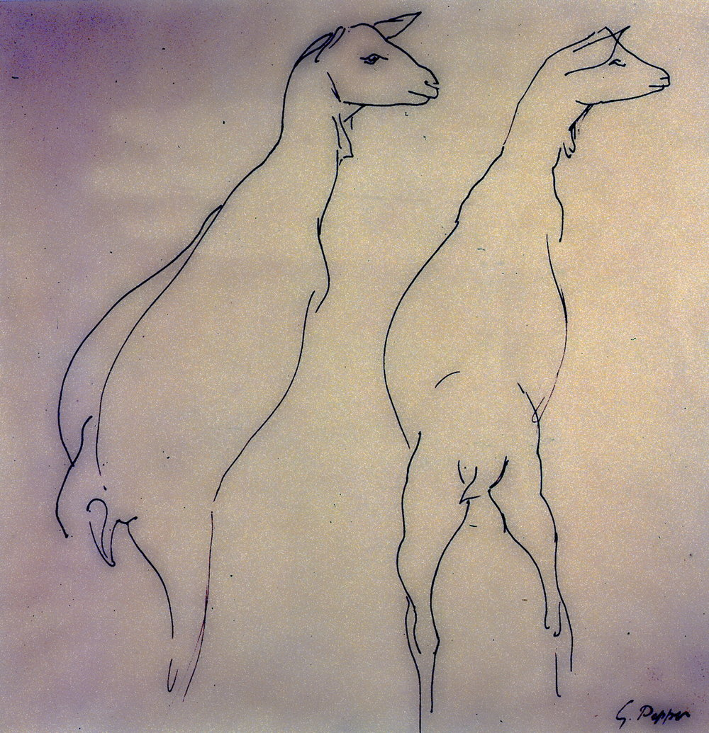 Untitled (Two Goats), n.d.