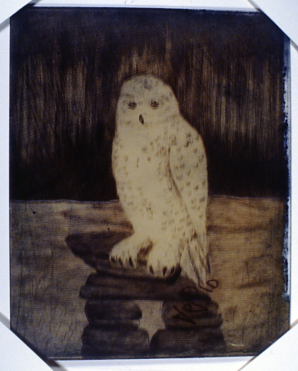 Snowy Owl, 1992, Minn Sjløseth, plastic etching plate, 30 x 24cm, 1996.02.02