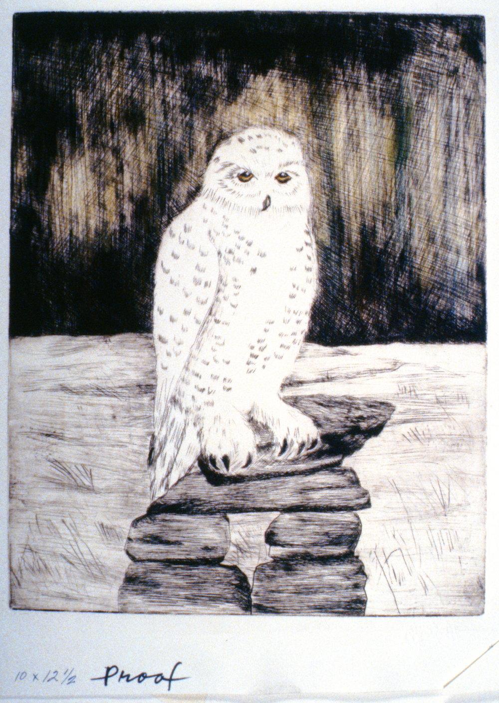 Snowy Owl, 1992, Minn Sjløseth, artist proof, 30 x 24cm, 1996.02.03