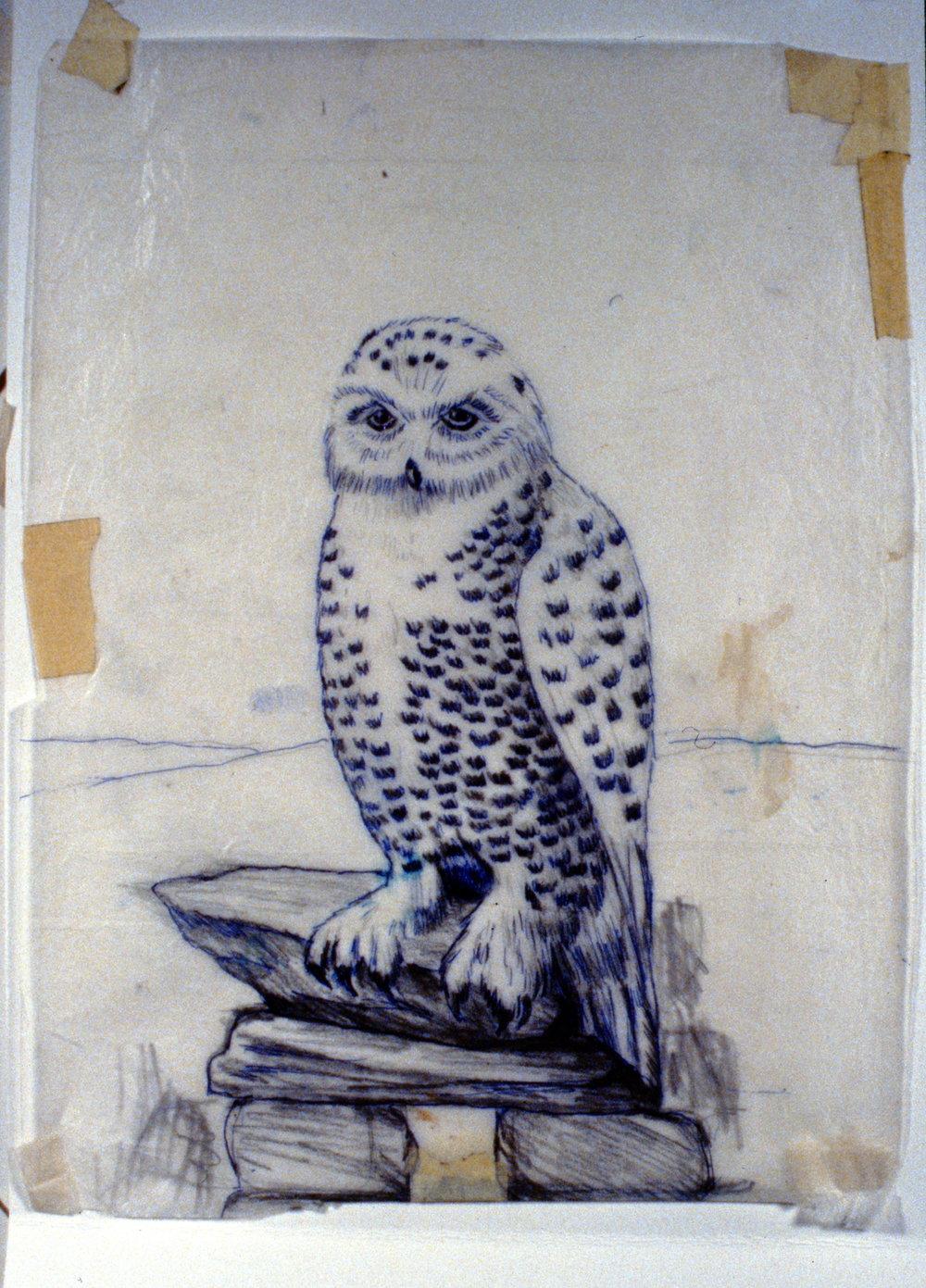 Snowy Owl, 1992, Minn Sjløseth, sketch, 27.5 x 21cm, 1996.02.04