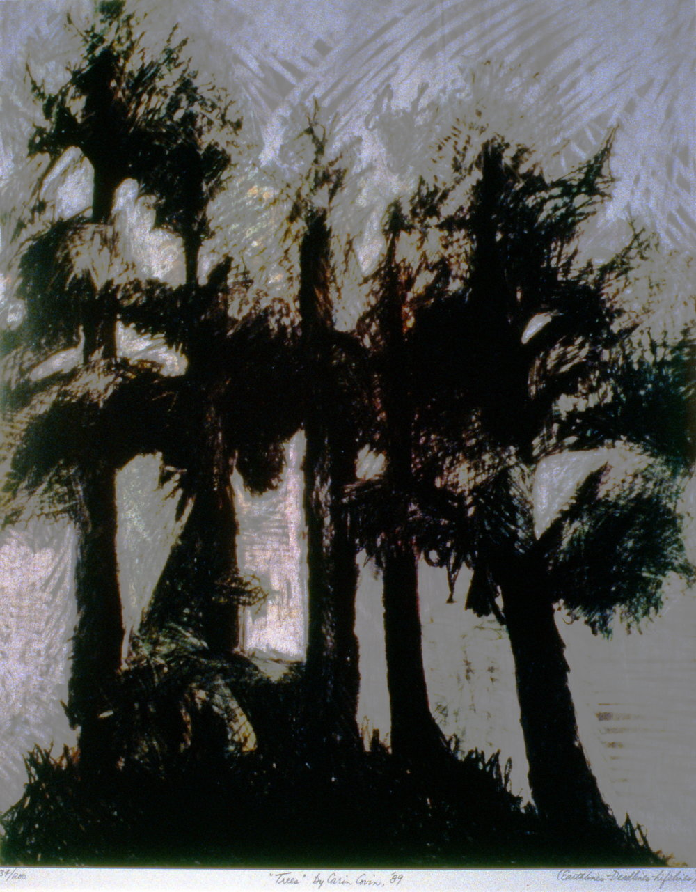 Trees,  1989, Carin Covin, drawing, 45.5 x 37 cm, 1995.06.01