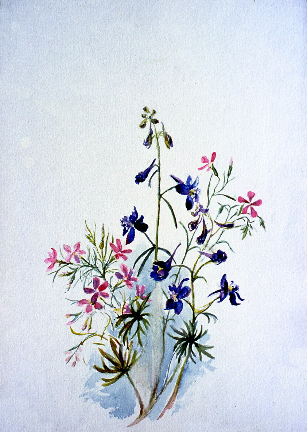 Untitled (Botanical - Pink & Blue Flowers), n.d. Julia Bullock Webster, watercolour on paper, 35 cm x 25.2 cm, 2003.02.17, gift of The Grist Mill at Keremeos
