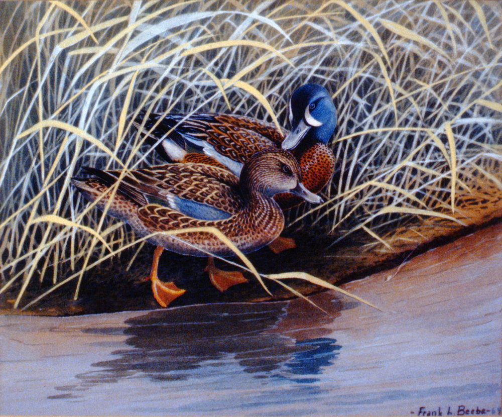 Blue Winged Teal , 1969, Frank Beebe, acrylic on matte board, 36.5 x 44 cm, 1995.01.02. Gift of the Okanagan Mainline Regional Arts Council.