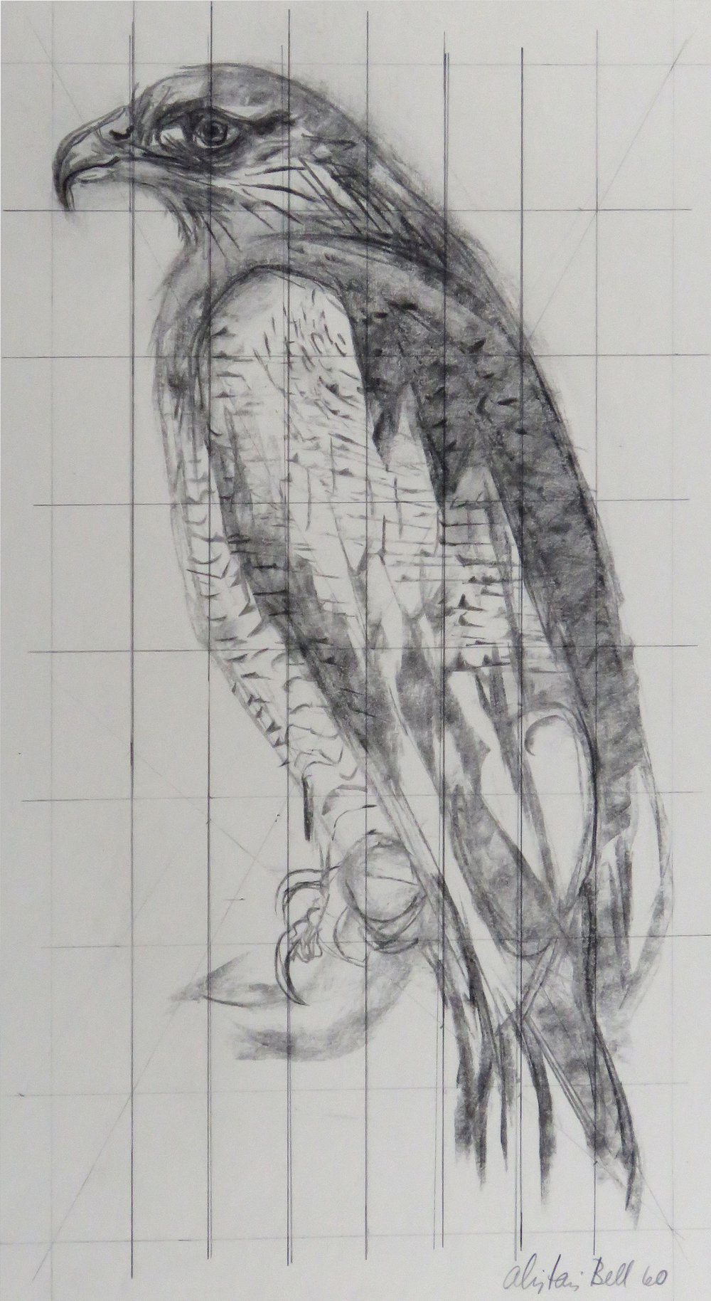 Eagle 89-60 charcoal (gridded).JPG