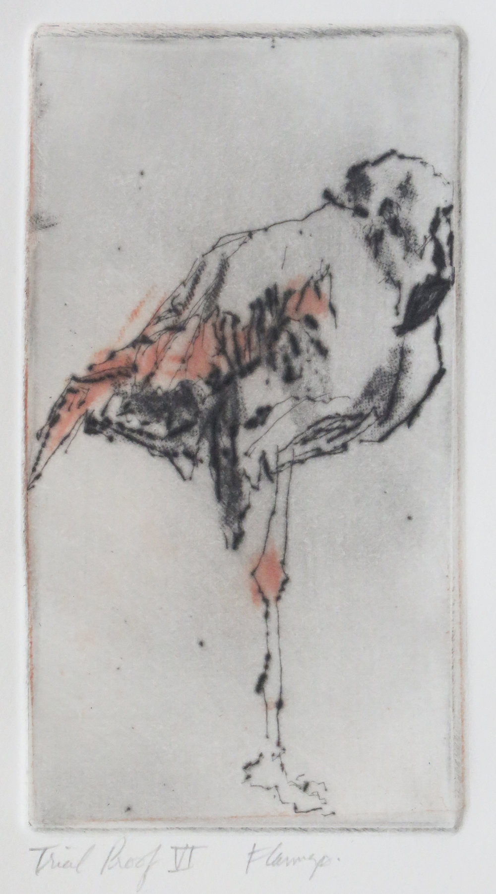 Flamingo colour drypoint.JPG