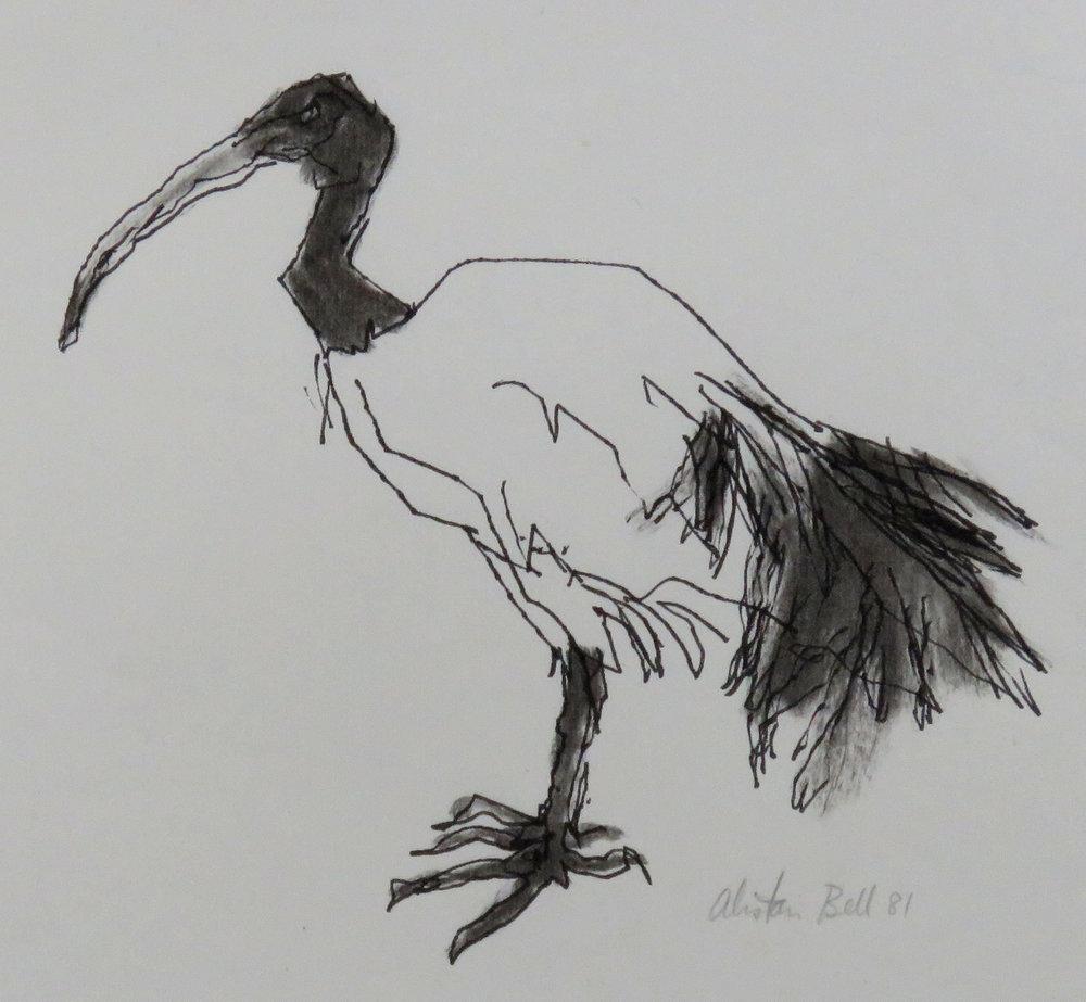 Ibis 10-81 ink & charcoal.JPG
