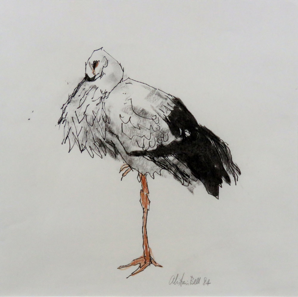 Eastern White Stork 6-84 ink, charcoal, sanguine.jpg