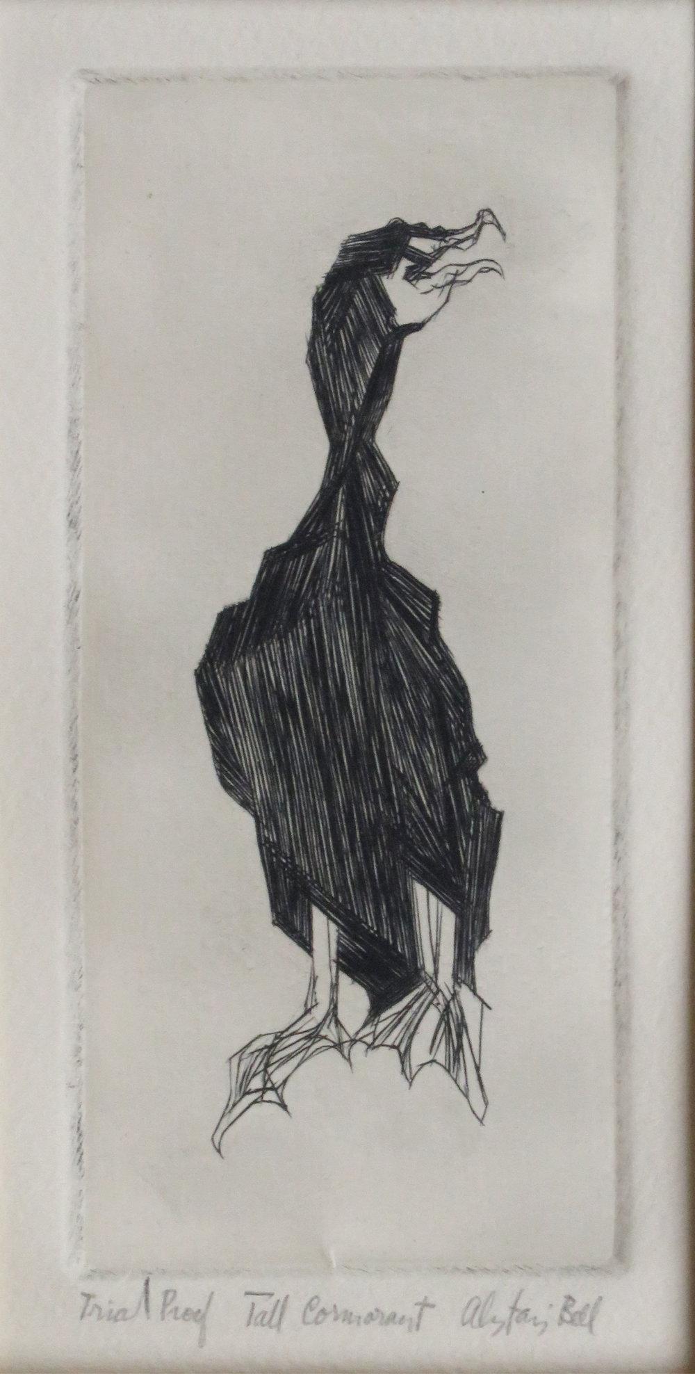 Tall Cormorant engraving, roulette.JPG